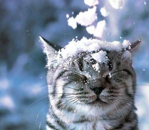 Снег упал на котэ